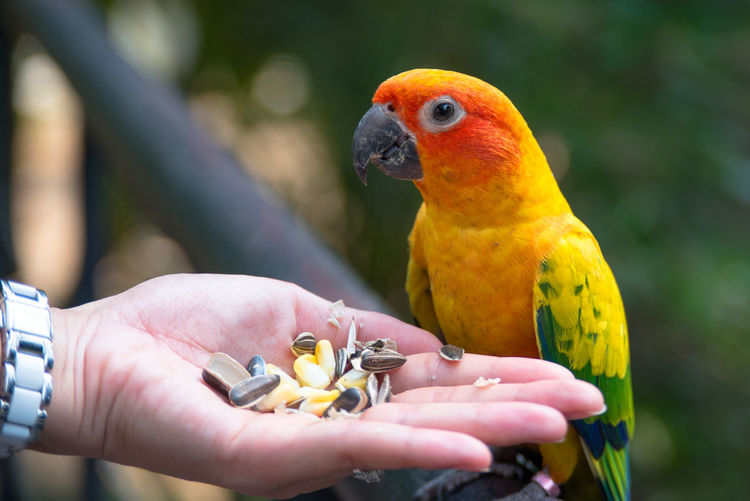 Close-up of hand holding parrot