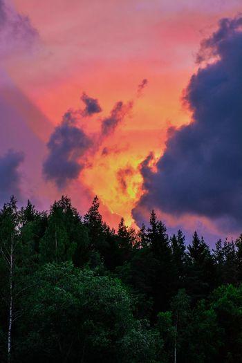 Sun Light Clouds Evening Sky Evening Sun