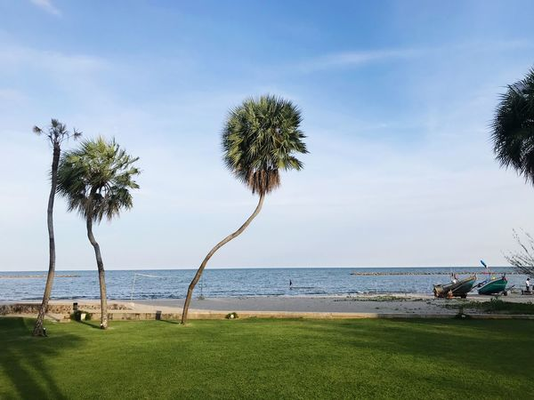Plant Water Sky Tree Sea Land Beach Grass Incidental People Tranquil Scene Growth Beauty In Nature Nature Horizon Scenics - Nature Day Horizon Over Water Tranquility Cloud - Sky Outdoors