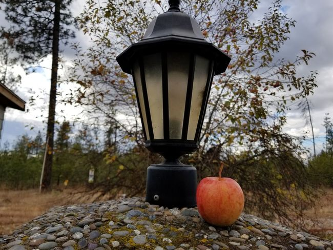 Tree No People Fruit Outdoors Day Nature Sky Freshness Close-up Focus On Foreground Food And Drink Moody Sky Line Cloud - Sky Fall Colors Fall Beauty Lanterns Lantern Fall Collection Winter Against The Bad Weather Apple Front View Fruits Fruit Photography