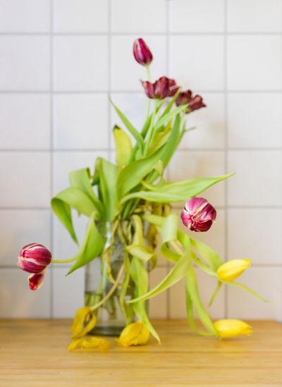 Wilted Tulips Close-up Flower Flower Head Indoors  Limp No People Old Red Red Flower Schlaff Tulips Tulpen Vase Verdorrt Verwelkt Welk Wilted Wilted Flower Wilted Flowers Wilting Wilting Flowers Withered  Withered Flower Withered Tulips Yellow Flower