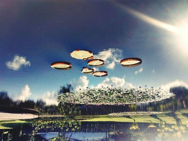 Astronomy Water Hot Air Balloon Tree Sky