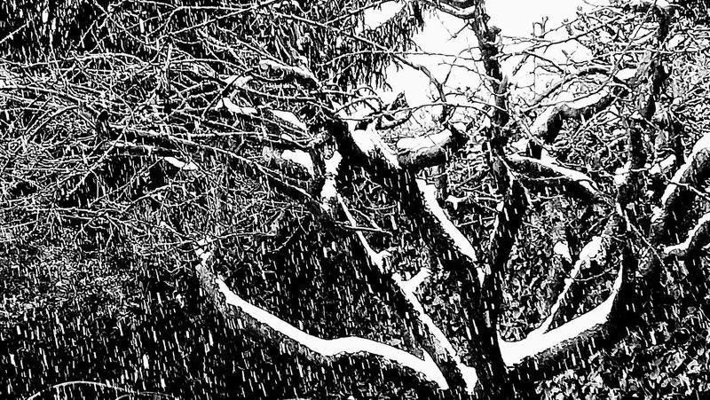 snowing again .. From My Point Of View Cold Temperature Frozen Frozen Nature Blackandwhite Photography Snowing Branch Wintertime Abstract Abstract Photography Monochrome Winter Snow ❄ Snow Monochromatic Black And White Black & White