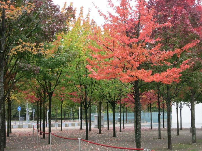 Autumn Colors Beautiful Autumn Berlin Nature In The City Autumn Red And Green Small Trees Trees In City