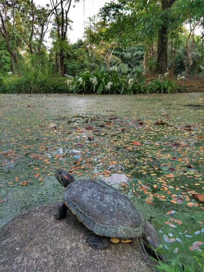 View of a turtle on ground