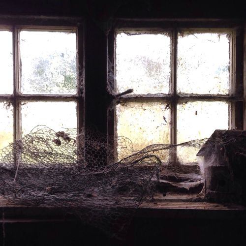 In the woodshed Cobwebs Spiders Birdhouse Vintage Window