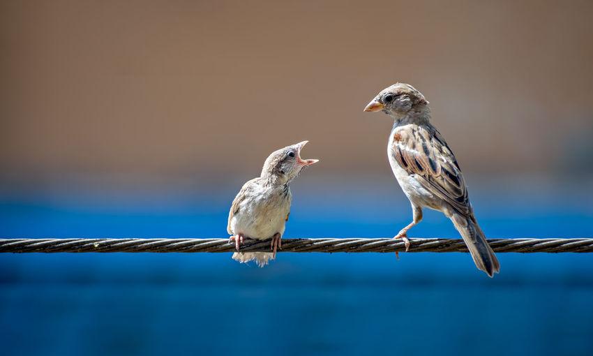 Bird perching on railing