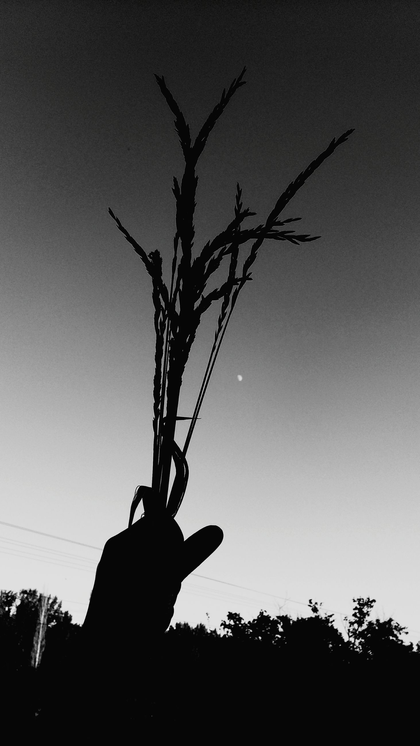silhouette, leisure activity, lifestyles, holding, sky, men, person, tree, low angle view, clear sky, field, nature, copy space, outdoors, plant, side view, unrecognizable person, landscape