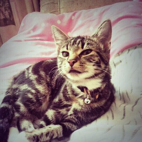 Kitten Looks Pissed Off