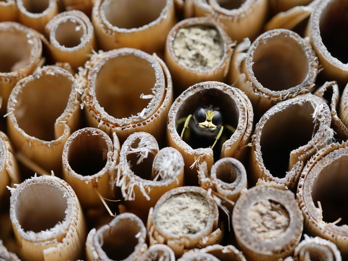 Insect Hotel Insect Abundance Animals Bamboo Tube Bee Detail Full Frame Home Is Where The Art Is Macro Nature No People Outdoors Save The Bees Side By Side Wildbee Animal Themes Close-up Close Up Extreme Close-up Ladyphotographerofthemonth Pivotal Ideas The Magic Mission Ice Age
