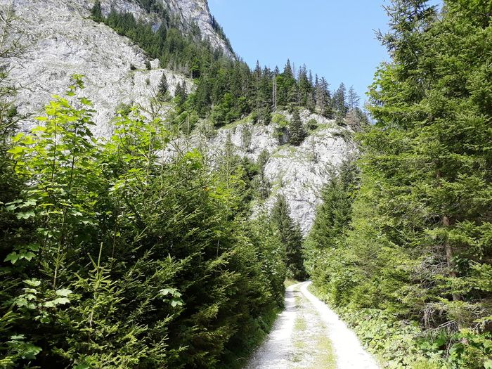 pathway through the forest to the top Pathway Mountain Trees Rock Trees On Rock Stone Way Coniferous Tree Conifer  Conifers Travel Vacation Holiday Austria Styria Styria Travel Destination Tragöss Tree Sky Green Color Plant