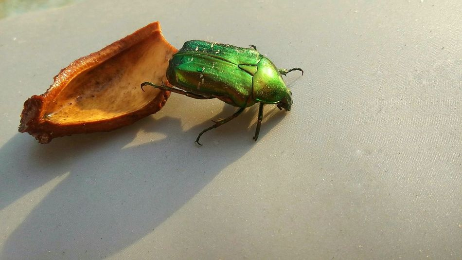 Bug Animal Themes Green Color Focus On Foreground Zoology One Animal