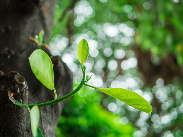 Agriculture Backdrop Backgrounds Beauty In Nature Beginnings Bokeh Botany Day Forest Fragility Freshness Garden Green Color Growth Leaf Nature New New Life Park Plant Sapling Sprout Sunlight Tree Young