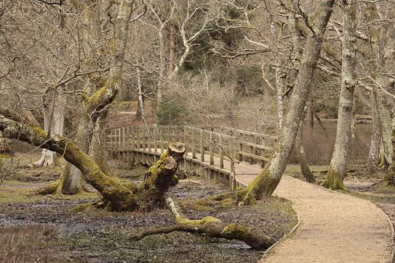New Forest Walk Broken Tree Log New Forest National Park New Forest, Hampshire. UK New Forest Walking Path Walking Route Wooden Brisge Over River Wooden Bridge Bridge Bog Day No People Nature Sunlight Architecture Outdoors High Angle View Built Structure Land Plant Water Tree