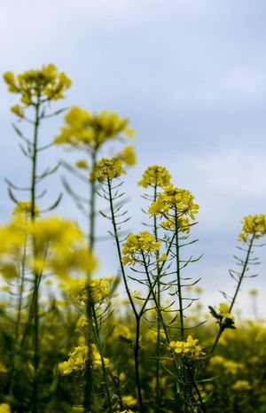 Flower Beauty In Nature Growth Vulnerability  Freshness Nature Yellow Sky No People Tranquility Outdoors Close-up EyeEmNewHere