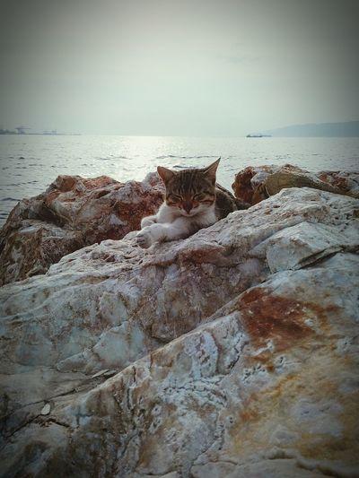 Günaydın Cat Animals Goodmorning Sea Followme Follow Followback Follow4follow