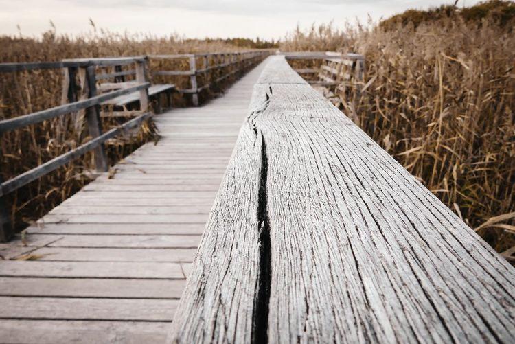 Surface level of boardwalk on pier