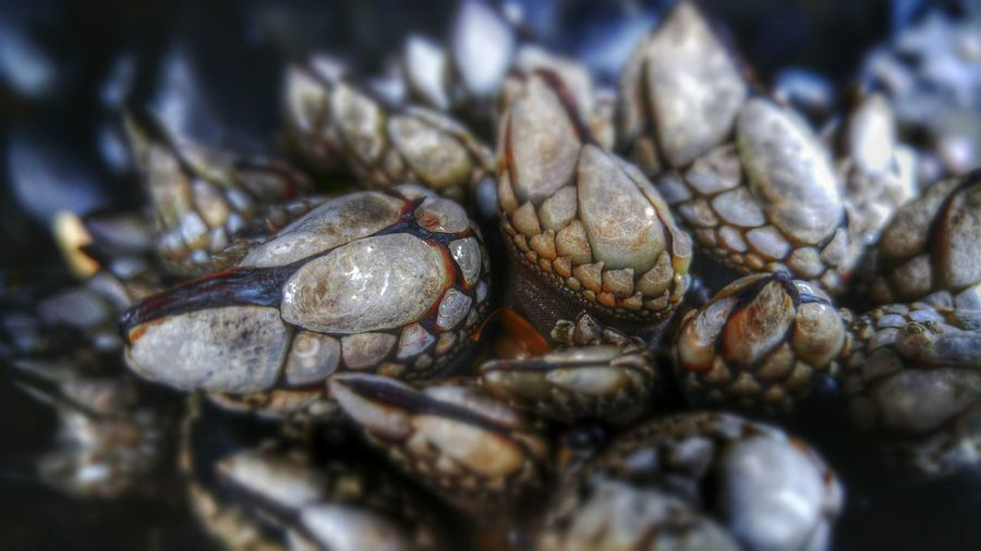 Detail Shot Of Mussels