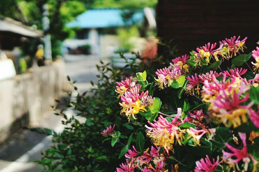 Garden May