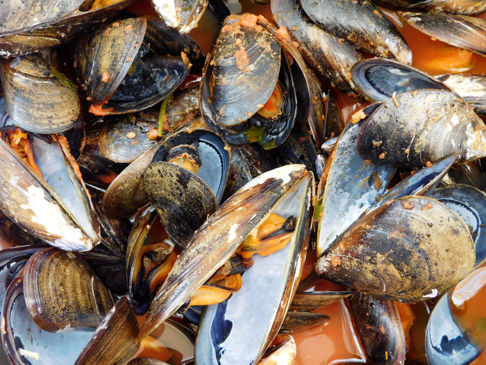 Full frame shot of mussels at market for sale