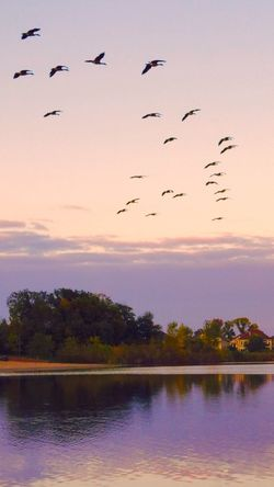 A very pretty evening! Check This Out Autumn Colors EyeEm Nature Lover Water Bird Photography Lakeshore Fall Birds Of EyeEm  Geese In Flight Geese Photography Waterfront Like A Painting