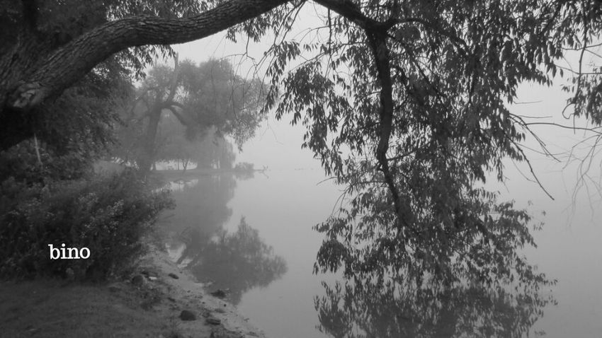 Eerie Atmosphere Morning Shoot Around The Lake Foggy Cool!! Black And White Photography Reflection Lake Cadillac Pure Michigan
