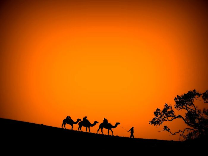 Silhouette Sunset Orange Color Animal Animal Wildlife Nature Animals In The Wild Outdoors Dusk Scenics Sky Travel Destinations Animal Themes Heat - Temperature Desert Mammal Beauty In Nature No People Rural Scene Safari Animals The Week Of Eyeem Minimalism Minimalistic Nature Photography Traveling