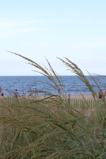 The ocean is calling Beach Beauty In Nature Clear Sky Day Grass Growth Horizon Over Water Marram Grass Nature No People Outdoors Plant Scenics Sea Sky Tranquil Scene Tranquility Water