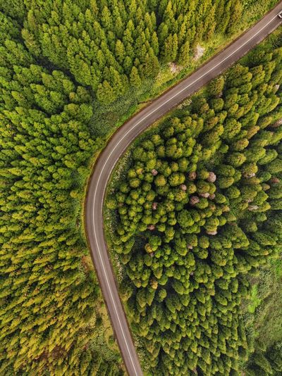 Top down view of right turn in the forest Pine Tree Azores Açores - São Miguel Tourism Portugal Drone Photography DJI X Eyeem DJI Mavic Air Green Color Plant Healthy Eating High Angle View Food And Drink Agriculture No People Aerial View Vegetable Rural Scene Transportation Beauty In Nature Freshness Nature Abundance Growth Land Landscape Food Day