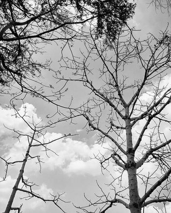 We're all of us haunted and haunting. Tags : Photography Instagram Instagood Instalike Instapic Doubletap India Sky Clouds VSCO Vscocam Vscophoto Canon Canonphotos Canon_photos Canonphotography Canonphoto Instacanon Canongram Vscophotos Vscophotography Naturephotography Photographyislifee Mi4photography Xiaomimi4 monochrome trees