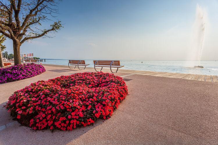 Red flowering plants at beach against sky