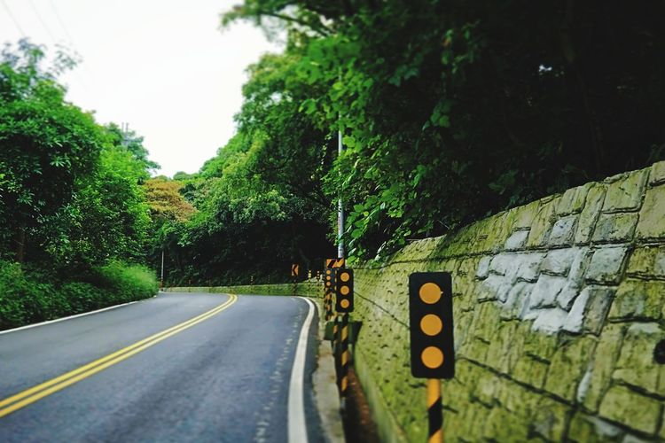 Avenue .🚗 Tree Green Undermountain Avenue Tree Road Road Sign Double Yellow Line One Way The Way Forward Country Road