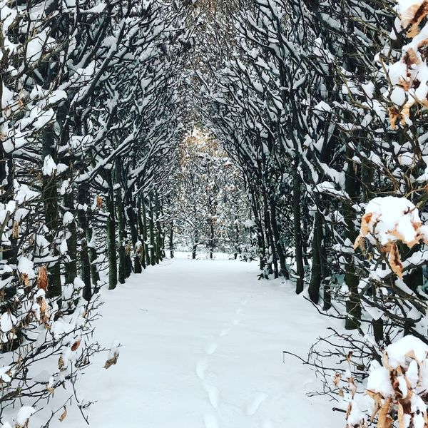 #im schlosspark Day Winter Outdoors Tree Snow No People Cold Temperature