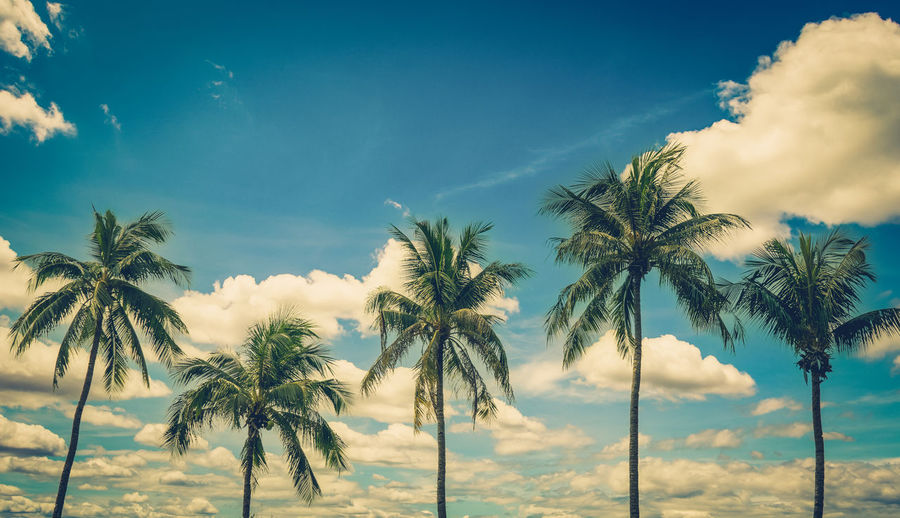 Coconut palm tree on blue sky background with vintage toned.