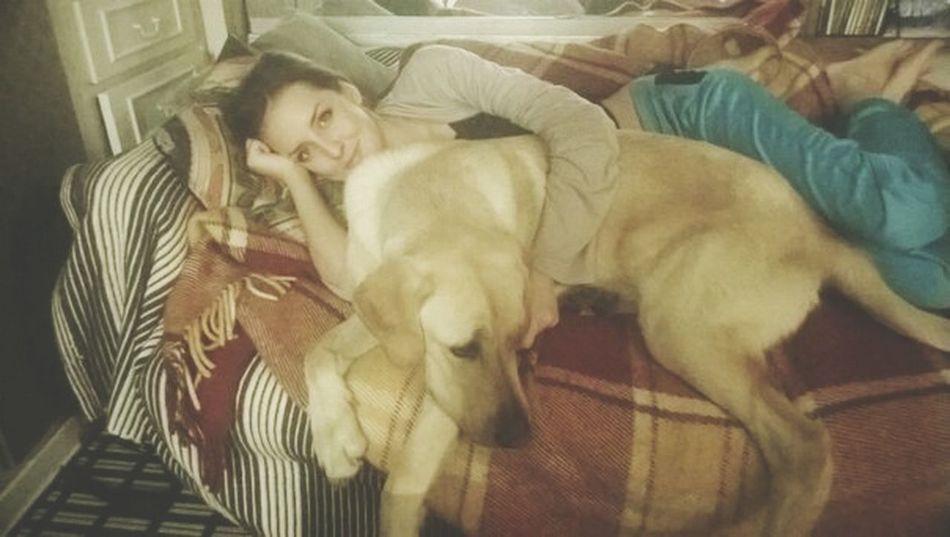 BIG Dog Labrador Maxie En Paris