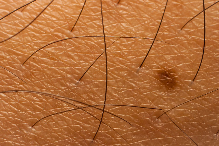 Close-up of human skin texture with hair and pigment Asian  Healthcare Backgrounds Close-up Day Freshness Healthy Indoors  Pigment Pigmentation Skin Texture