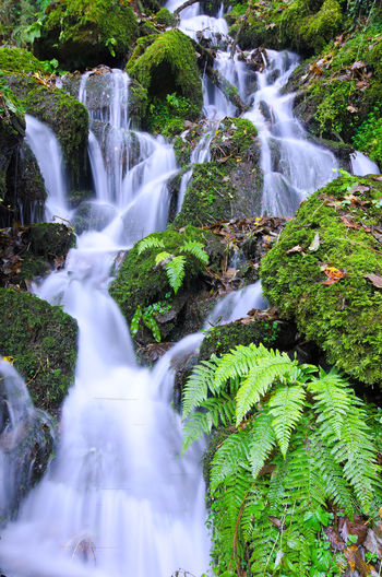 Beauty In Nature Blurred Motion Day Flowing Water Forest Freshness Green Color Growth Long Exposure Motion Nature No People Outdoors Plant Power In Nature River Scenics Somerset Tourism Travel Destinations Tree Vacations Water Waterfall Watersmeet