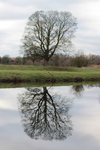 My favourite tree Relection On Water