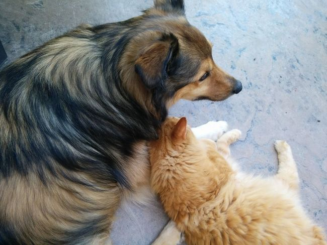 Animal Love Best Buds Best Friends Cat Cuddles Dog Dog And Cat Dog And Cat Best Friends Domestic Animals Friends Long Haired Cat Pets Long Goodbye