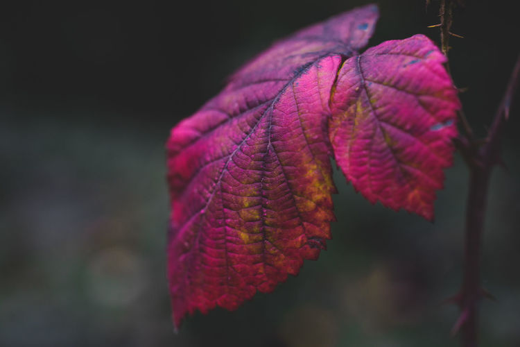 Plant Part Close-up Leaf Plant Beauty In Nature Growth No People Focus On Foreground Leaf Vein Fragility Vulnerability  Nature Day Selective Focus Outdoors Autumn Change Tranquility Freshness Natural Pattern Leaves Natural Condition