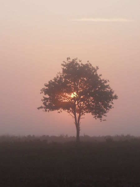 Atmosphere Atmospheric Mood Beauty In Nature Copy Space Countryside Distant Fog Horizon Over Land Landscape Light Majestic Misty Mornings Non-urban Scene Outdoors Peeking Sun Romantic Landscape Romantic Sunrise Scenics Sun And Trees Sunrise Tranquil Scene Tranquility Tree_collection