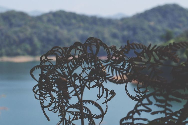 Leaf Fantasy Beautiful Nature Flower Photography Showcase: February