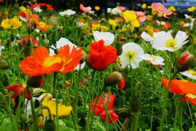 Colorful Flowers Flowersgarden Travel Photography Travel