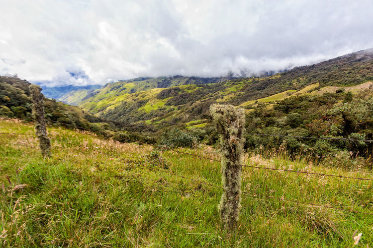Aged fence posts and wild grass in pasture land in the mountains outside of Salento, Colombia. Cloud Colombia Farm Hiking Palm Pasture Quindío Rural Tree Trip Andean Cauca Colombian  Countryside Fence Forest Hike Jeep Landscape Old Quindío Salento Tolima Trek Wax