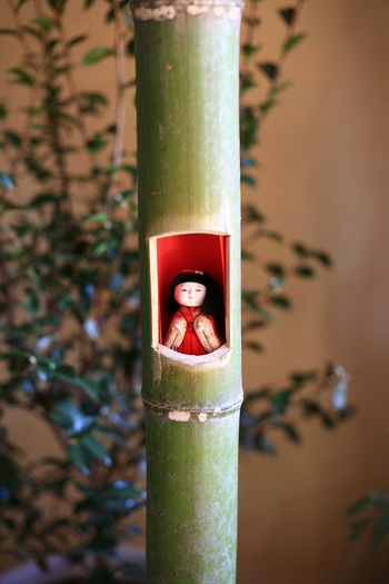 キャノン Canon 可睡斎 Eos5d Oldlens オールドレンズ Japan Photography Japanese Culture Cool Japan 雛人形