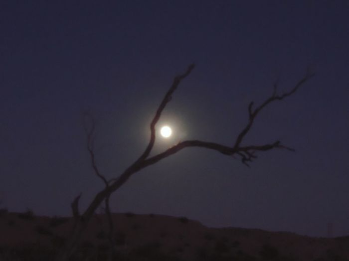 Moon Nature Beauty In Nature Night Scenics Tranquility Outdoors Sky Tranquil Scene Low Angle View No People Moonlight Half Moon Clear Sky Astronomy Shillouette Moon Rising Dead Tree