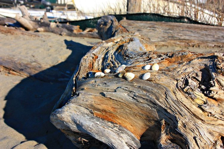 High angle view of driftwood on tree trunk