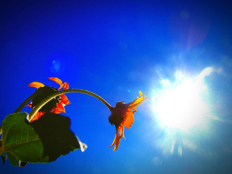 Flowers Sun Sunsrays Sky Indirect Taking Photos Photography Photographylover MyPhotography Photolife Unique Summer Summertime Nature Lover Scenery Beautiful Day Nature Photography Nature Nationalpark Blue Sky Monument Colour Of Life