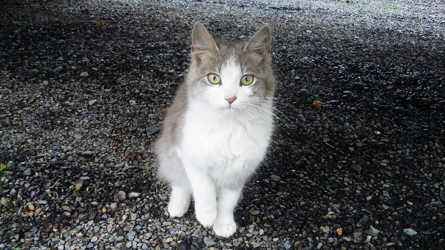 Cat Baby EyeEm