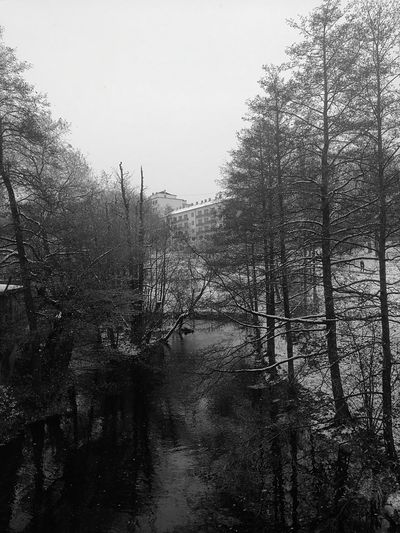 Tree Water Sky Wet No People Outdoors Day Norway November Calm Norge Cold Temperature Akerselva City City Life Oslo Black & White